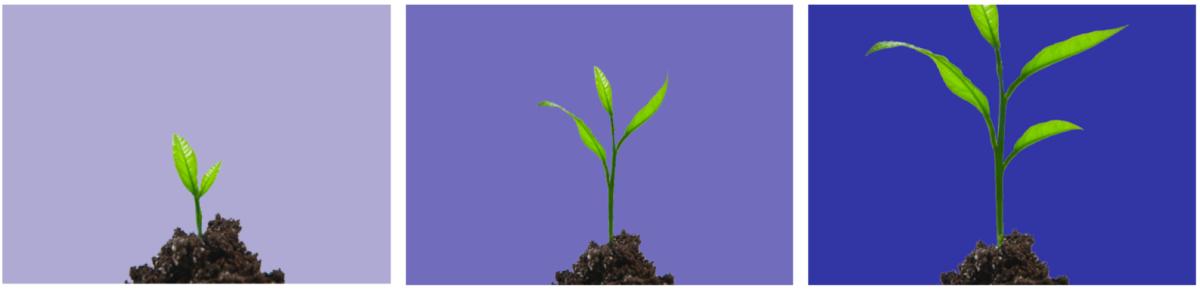 Percorsi di Crescita
